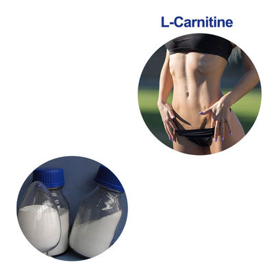 China L - Carnitine CAS  541-15-1 Food Grade Amino Acids Bulk Powder For Weight Loss supplier