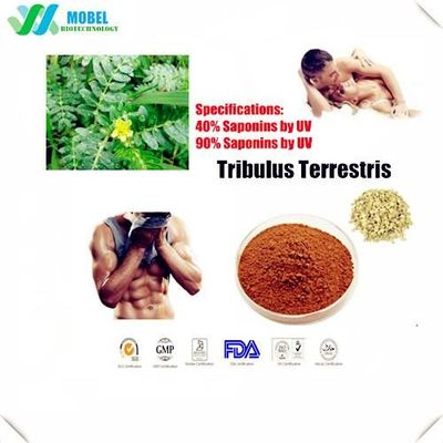 Nature Testosterone Tribulus Terrestris  Herbal nature for Male enhance Supplements Tribulus Saponins 40%-90%